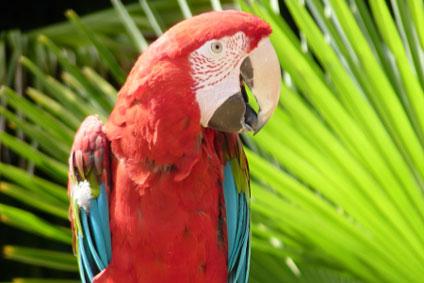Birdworld-Green-Wing-Macaw-2013-450x269