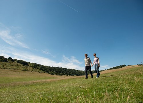 stroll-grassland