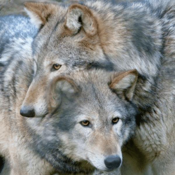 New Forest Wildlife Park Info Events Discounts Vouchers