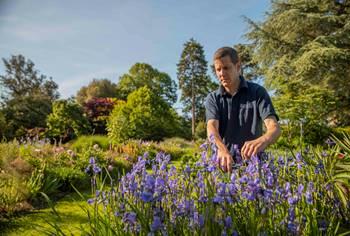 Exbury's head gardener Thomas Clarke tending the flag irises which are in full bloom