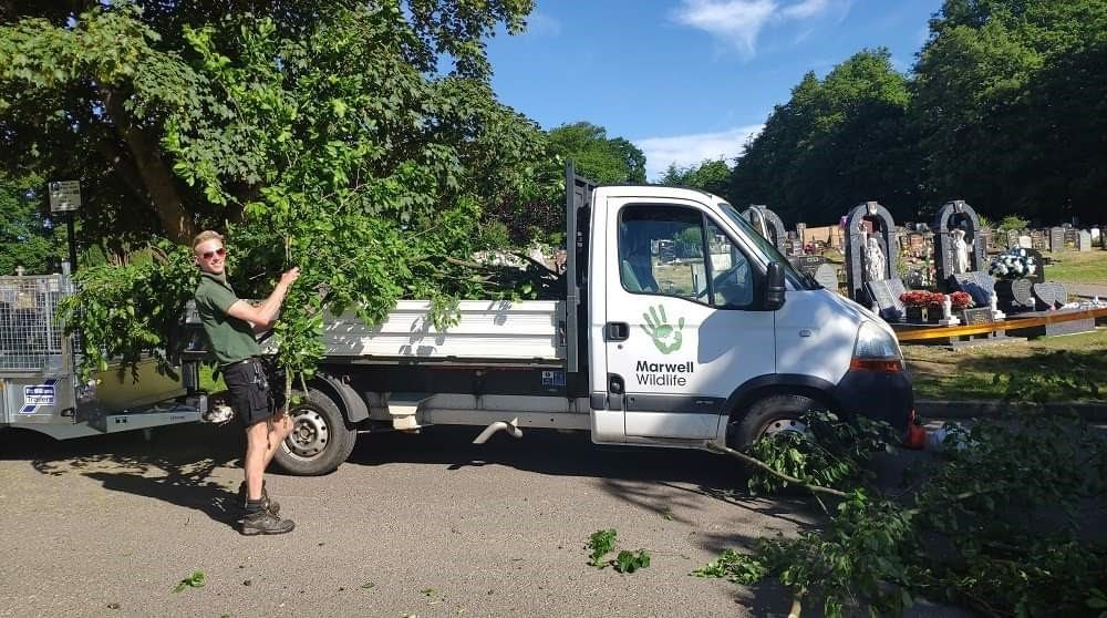 Cemetery tree destroyed by vandals will help feed zoo animals