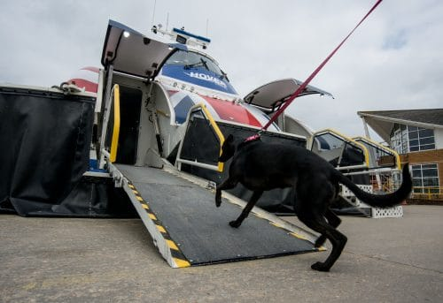 Dogs go free on Hovertravel