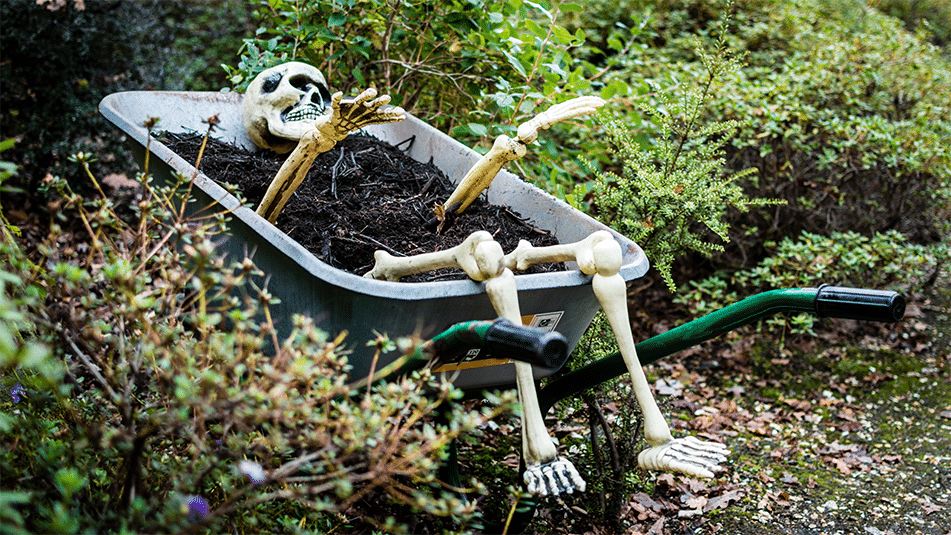 Gruesome garden trail | Halloween activities | Exbury Gardens | New Forest, Hampshire