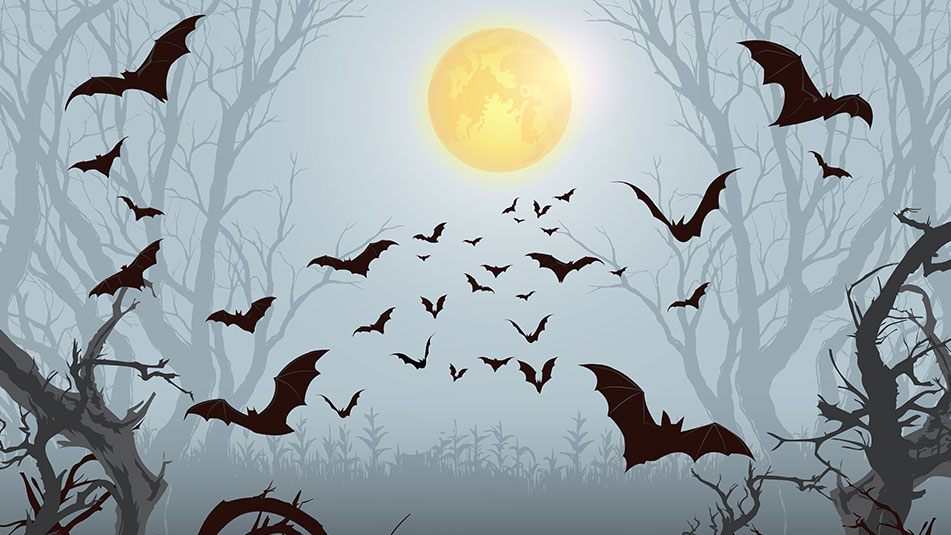 Bat Box Making | Halloween family event | Exbury Gardens & Steam Railway | New Forest, Hampshire