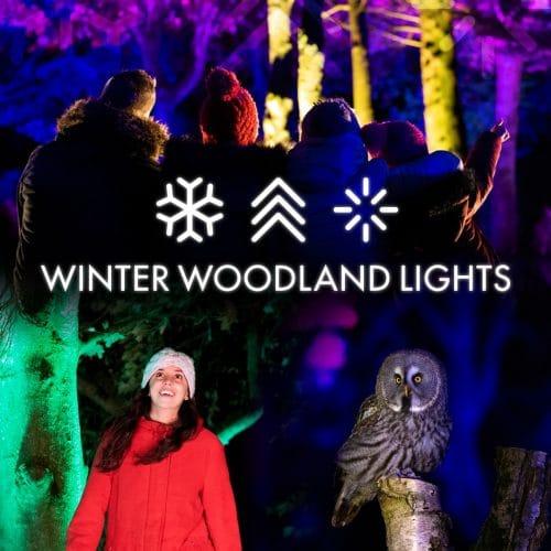 Winter Woodland Lights at The Hawk Conservancy Trust.