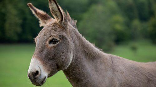 Donkey Day at Exbury Gardens & Steam Railway