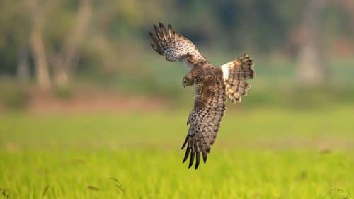 Falconry Day at Exbury Gardens in the New Forest - Hampshire Attractions